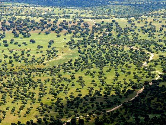 Dehesa del Valle de Alcudia Foto Vicente Luchena - Valle de Alcudia-Castilla La Mancha-España