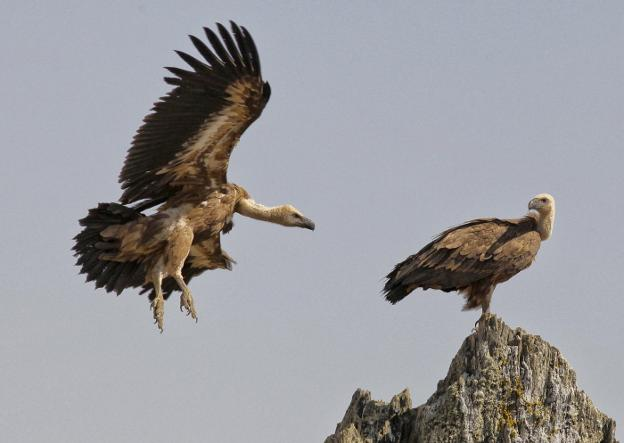 arribes parque natural - Arribes del Duero Natural Park-Castilla y León-Spain