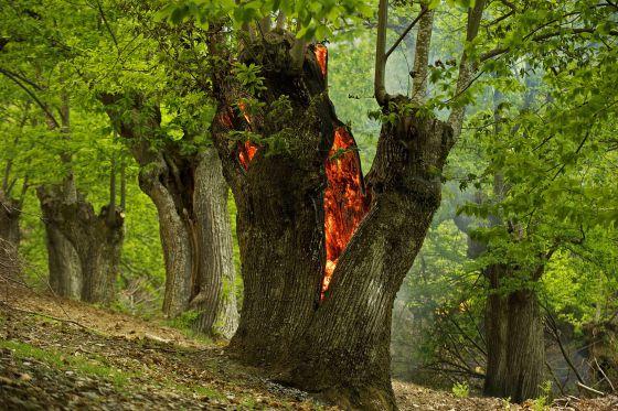 enciña da lastra - Serra da Enciña da Lastra Natural Park-Galicia-Spain