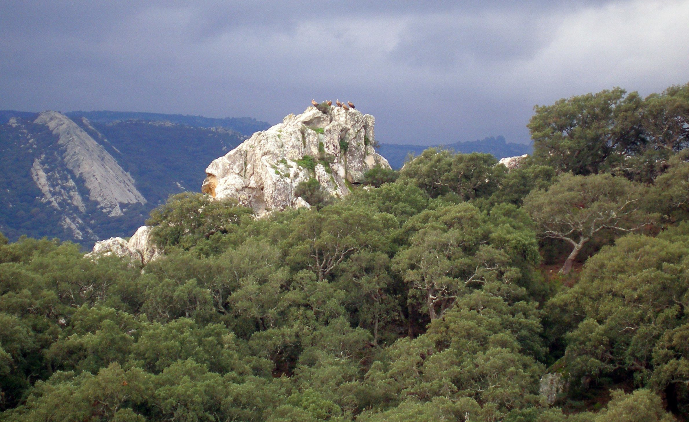los alcorconales parque natural scaled e1587909842200 - Los Alcornocales Natural Park-Andalusia-Spain