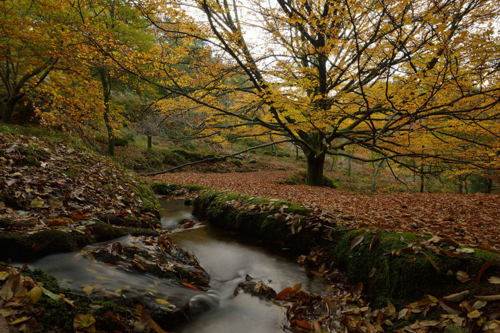 monte aloia parque e1587656690852 - Monte Aloia Natural Park-Galicia-Spain