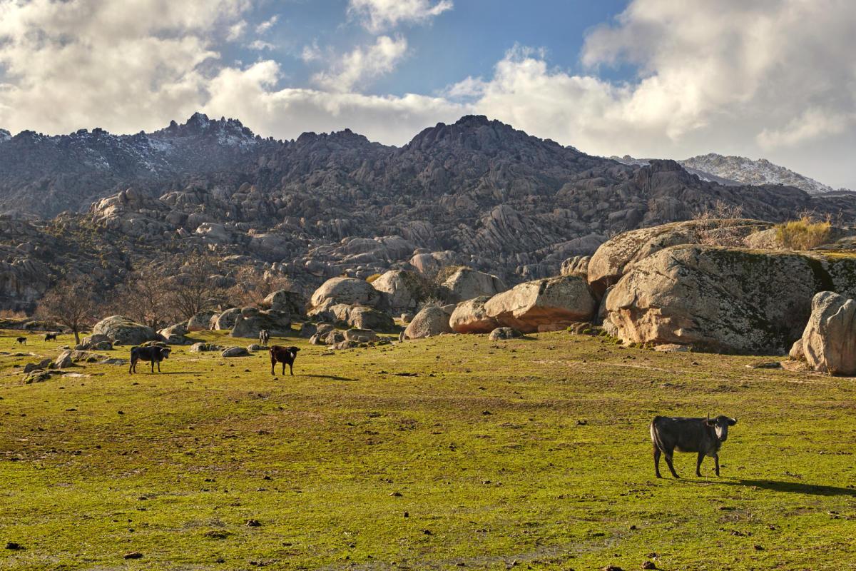 parque guadarrama - Sierra de Guadarrama National Park-Madrid-Spain
