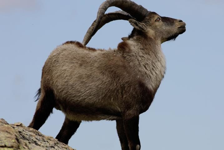 parque natural guaderrama animales e1587804337816 - Sierra de Guadarrama National Park-Madrid-Spain