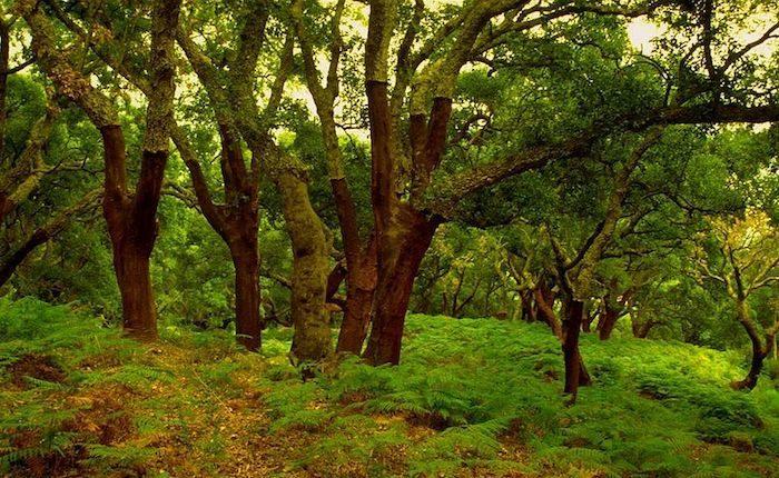 parque natural los alcorconales e1587909980820 - Parque Natural Los Alcornocales-Andalucía-España