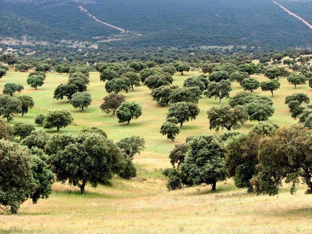 parquenaturalvallealcudia - Valle de Alcudia-Castilla La Mancha-España