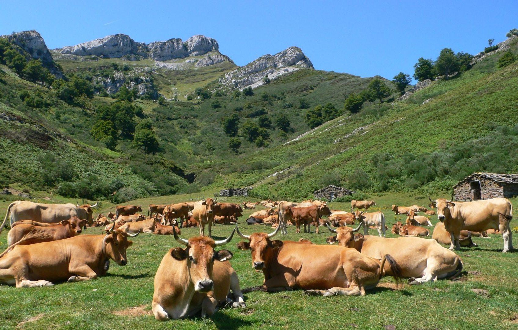 ponga parque asturias e1587388812433 - Ponga Natural Park-Asturias-Spain