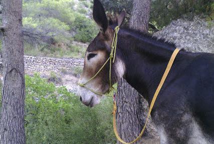 rucsmontsant e1586961082215 - Sierra de Montsant-Cataluña-España