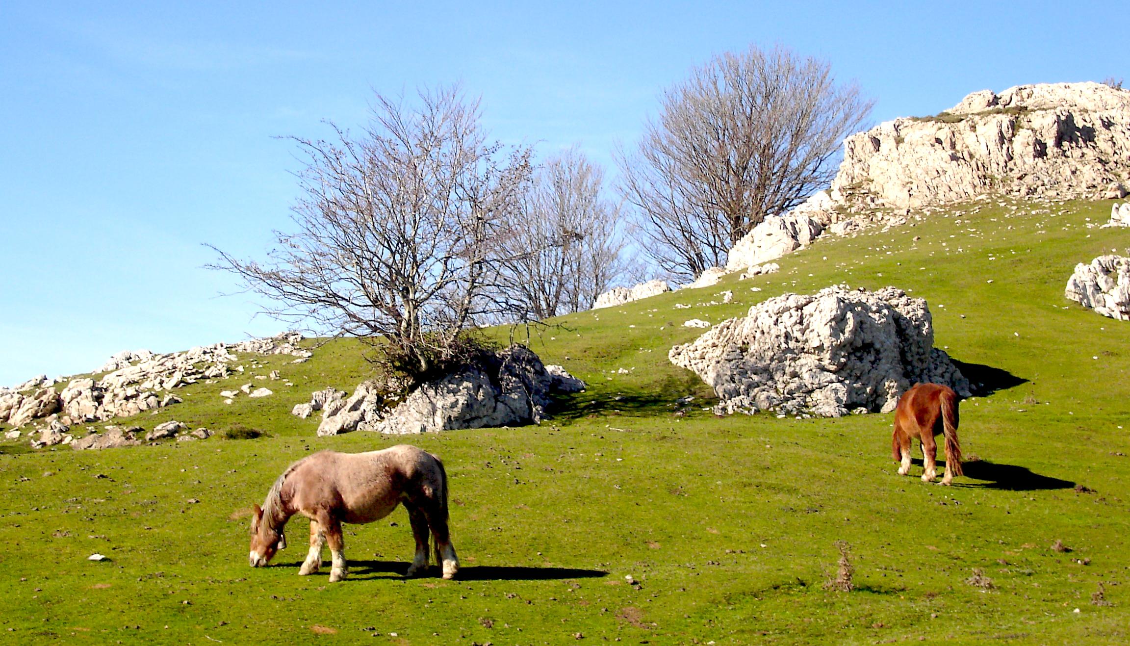 Aizkorri caballos - Parque natural de Aizkorri-Aratz-País Vasco-España