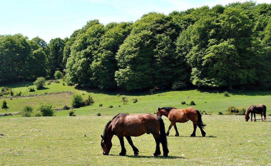 Sierra de Urbasa Navarra e1588609636594 - Parque Natural Urbasa-Andía-Navarra-España