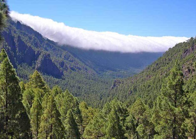 coronaparquenatural e1588965809230 - Corona Forestal Natural Park-Canary Islands-Spain