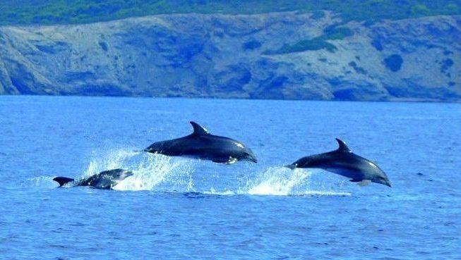 delfinescabrera e1588778895696 - Archipiélago de Cabrera-Islas Baleares-España