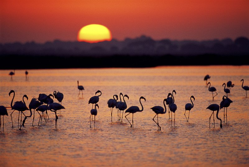 donana atardecer - Doñana National Park-Andalusia-Spain