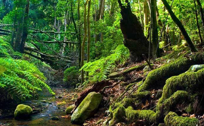 parque nacional garajonay la gomera e1589010968678 - Parque Nacional de Garajonay-Islas Canarias-España