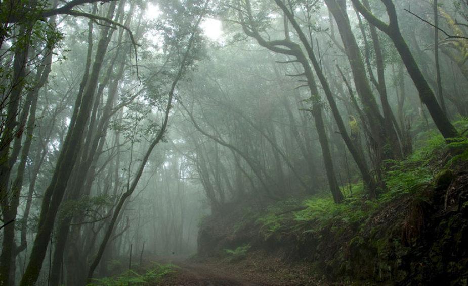 parquegarajonay e1589010825247 - Parque Nacional de Garajonay-Islas Canarias-España