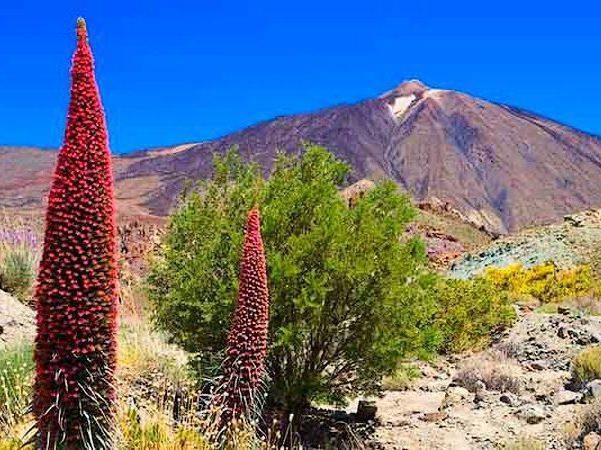 parquenacionalteide e1589013248211 - Parque Nacional del Teide-Islas Canarias-España