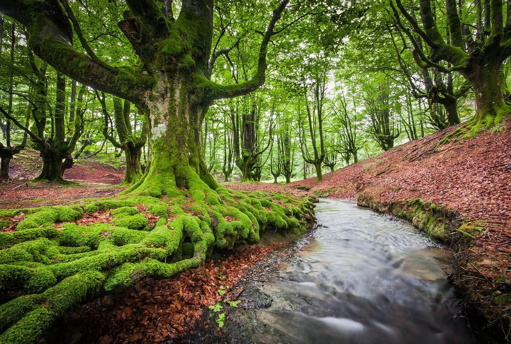 parquenaturalgorbea e1588327944747 - Parque Natural de Gorbeia-Basque country-Spain