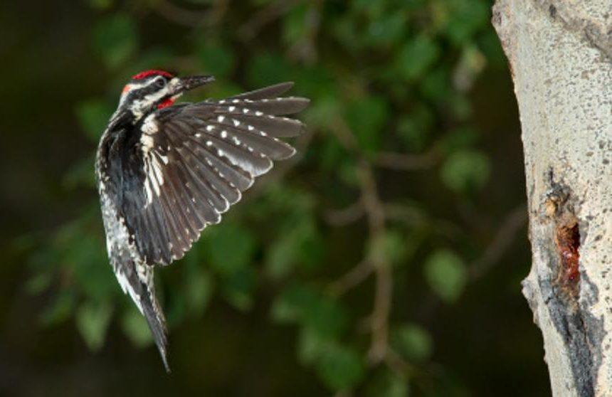 tamabadaanimales e1588951966464 - Tamadaba Natural Park-Canary Islands-Spain