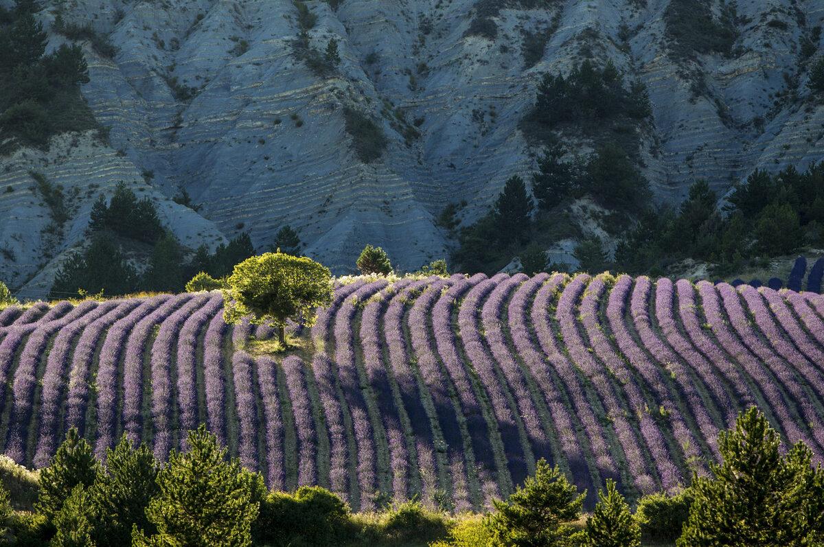 baronias parque natural e1602143347981 - Parc Naturel Régional des Baronnies Provençales-Drôme-France