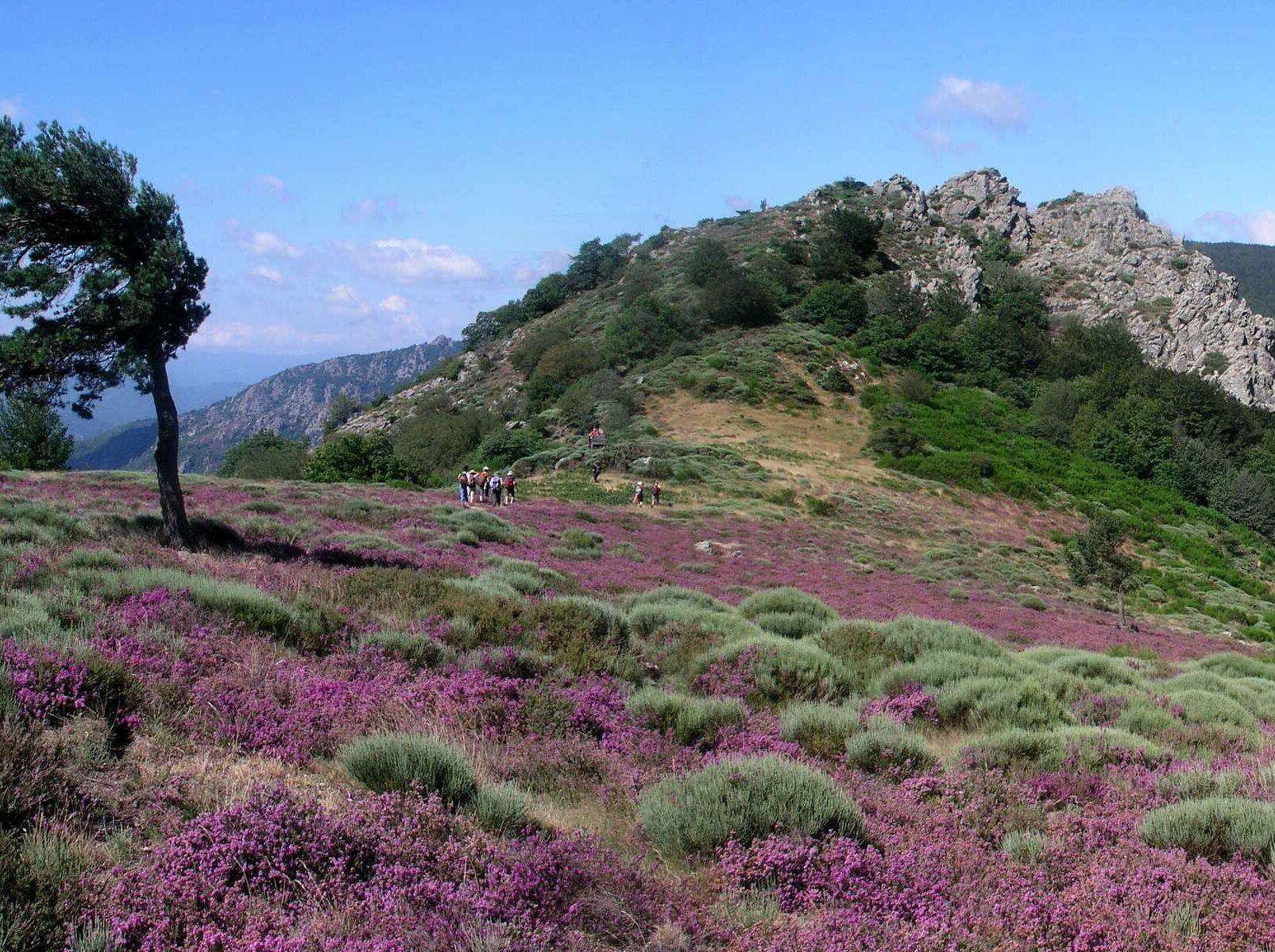 parquealtolanguedoc e1601708419220 - Parc Naturel Régional du Haut Languedoc-Hérault-Tarn-France