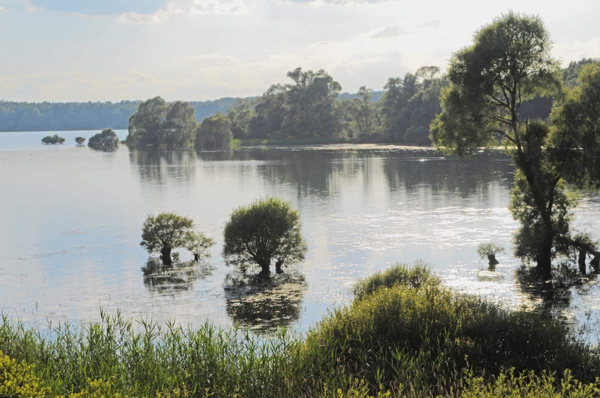 region lac de la foret d orient - Parc naturel régional de la forêt de l'Orient-Aube-France