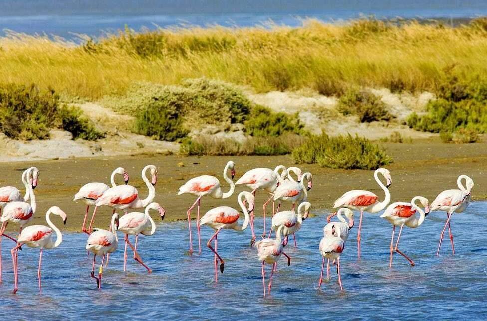 parquenaturalcamarga e1606648421427 - Parc Naturel Régional de Camargue-Bouches du Rhône-France