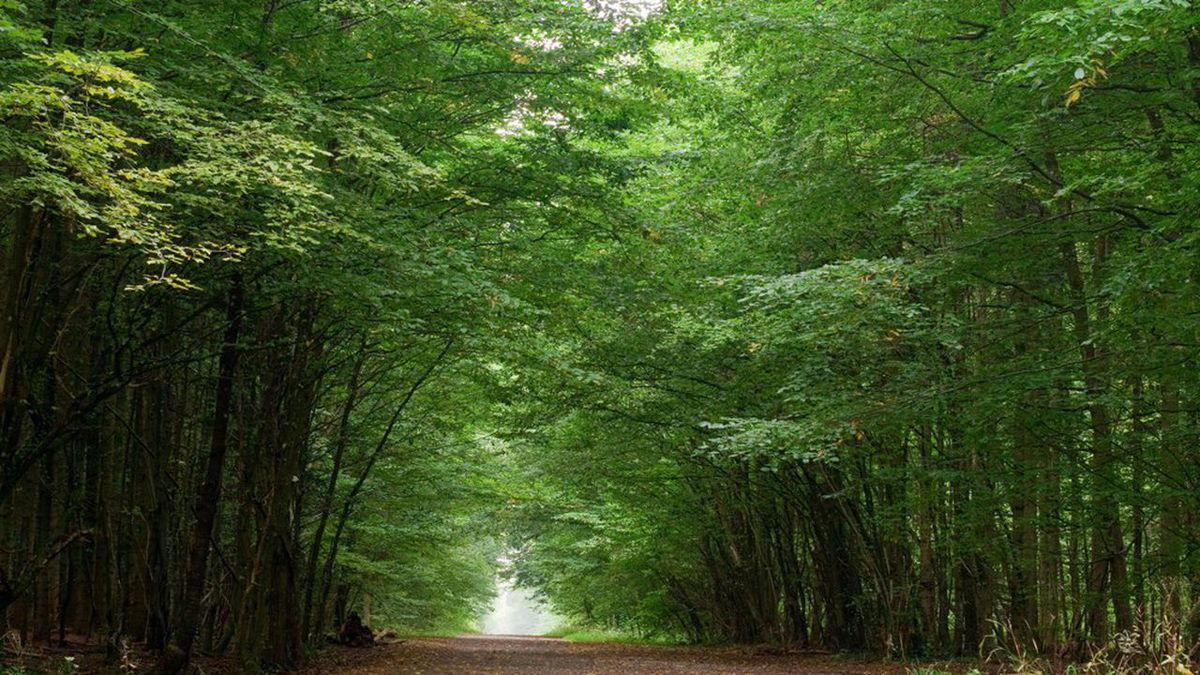 gatinaispark - Parc Naturel Régional du Gâtinais Français-Essonne-France
