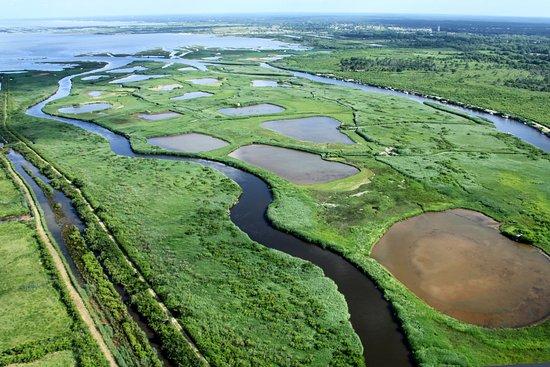 le cote sauvage du bassin - Parc Naturel Régional des Landes de Gascogne-Gironda, Landas-France