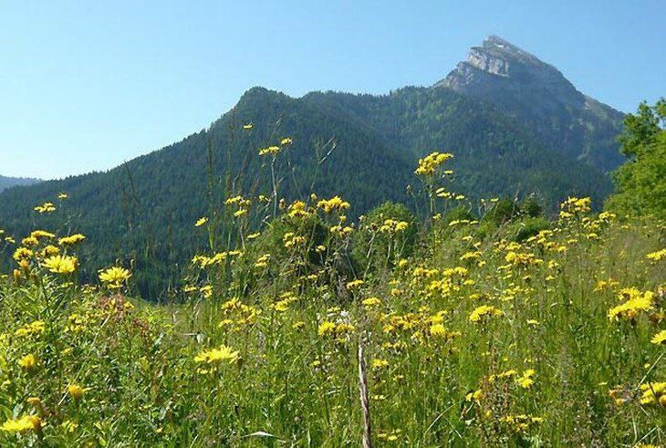 parquenaturalchartreuse e1613417573428 - Parc Naturel Régional de la Chartreuse-Isère-Savoie-France