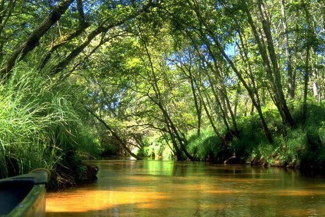 parquenaturalgascuña e1613758551427 - Parc Naturel Régional des Landes de Gascogne-Gironda, Landas-France
